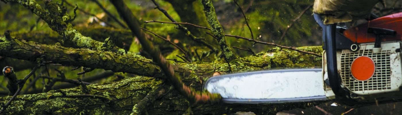 Puude langetamine ja lõikus